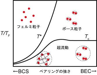 図1:BCS理論に基づく超伝導とボース・アインシュタイン凝縮(BEC)による超伝導の状態相図 電子はフェルミ粒子に分類される素粒子で、超伝導状態になるとクーパー対と呼ばれる電子対を作りますが、BCS理論では電子対は空間的に広がっていると考えられます(BCS超伝導)。BCS理論によると、超伝導への転移温度Tcは、フェルミ面を構成するバンドを占有する電子の数に対応するフェルミエネルギーを温度に換算したフェルミ温度が高いほど高くなると考えられます。クーパー対を作るペアリングの強さがフェルミ温度に比べて強くなると、図中T*より低温でボース粒子とみなせる電子対を作ってから、ボース・アインシュタイン凝縮を起こすことで超伝導状態になると考えられます(BEC超伝導)。BEC超伝導では、T*以下でボース粒子が出来ることから、超伝導の前駆現象として擬ギャップと呼ばれる現象が生じると考えられます。